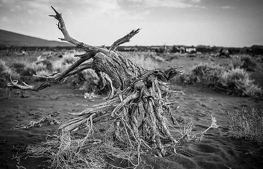Hell Roots (Ethiopia)