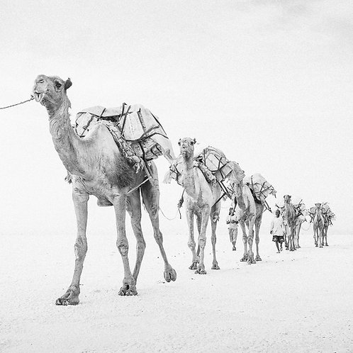 Camel 2 (Ethiopia)
