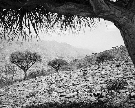 Danakil (Ethiopia)
