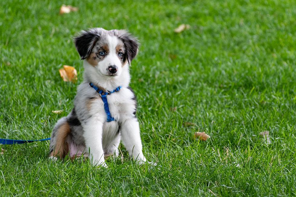 puppy-on-grass-field-1322182.jpg