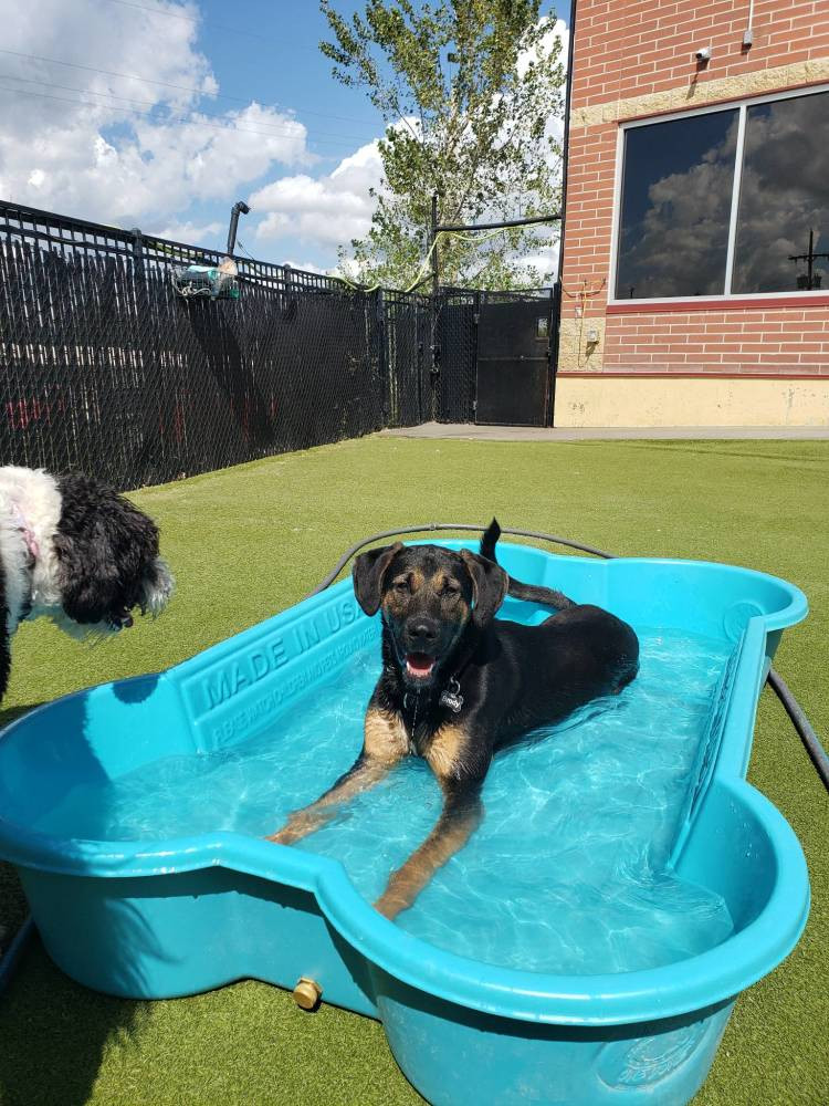 Doggy daycare in the summer