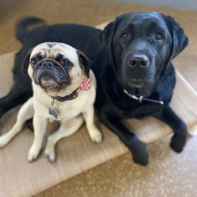 Best buds at Woof's