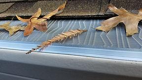 Gutterglove leaf filter