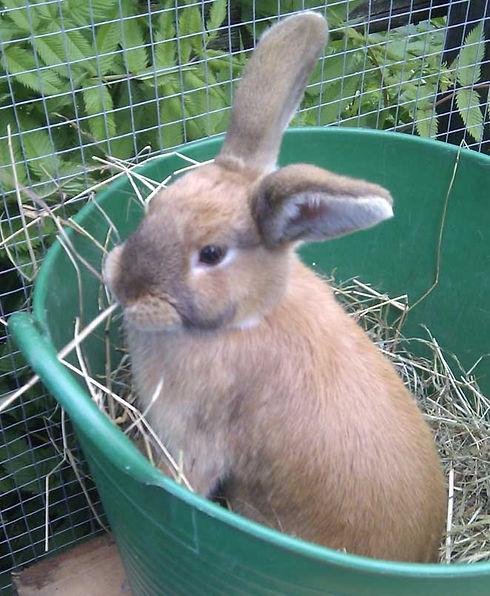 Kanin-Nyfiken-beskuren.jpg