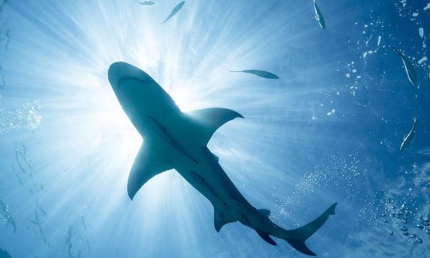 shark-magnet-478080061.jpg