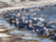 fi-whales01.jpg