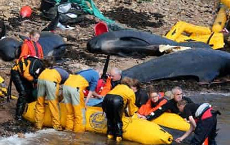 Stranded-whales-011.jpg