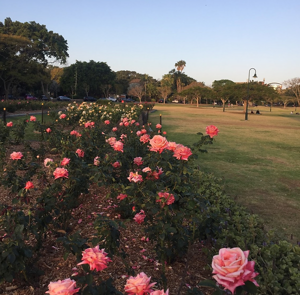Roses new farm park.png