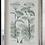 Thumbnail: Herb Garden Print