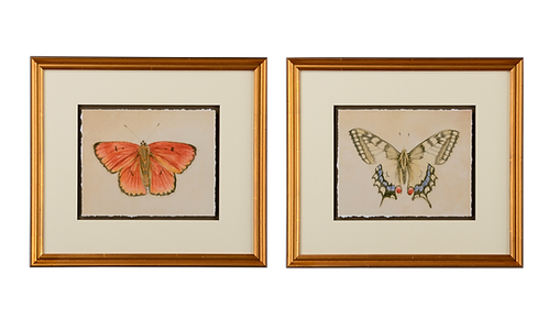 Butterfly Study III & IV - Pair