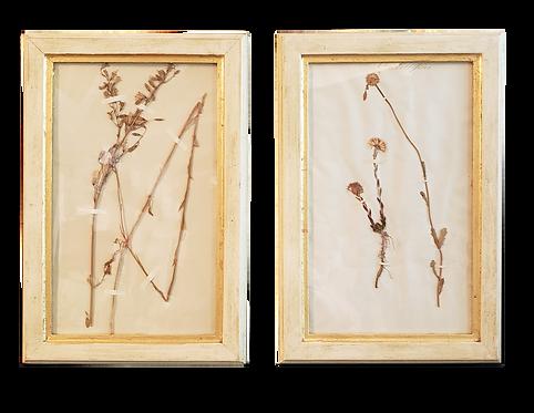 Pressed Botanicals - Pair