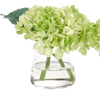 Green Hydrangea Bud Vase