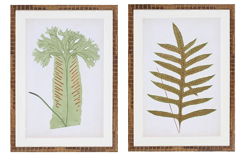 Fern Family V & VIII - Pair