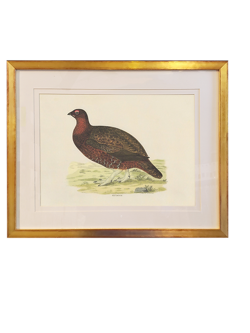 Framed Small Pheasant - Pair