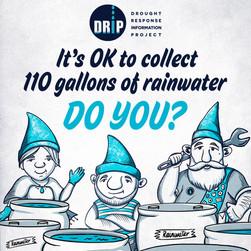 DRIP-Tip-Collect Rainwater.jpg