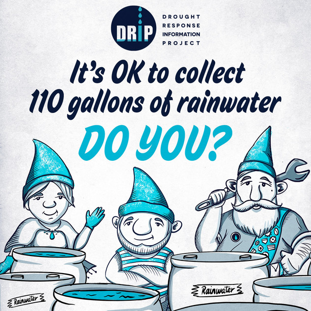 DRIP-Tip-Collect Rainwater.jpg