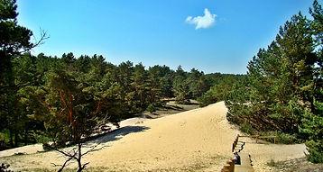 orzechowska wydma.jpg
