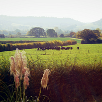 field opposite fros fayre.png