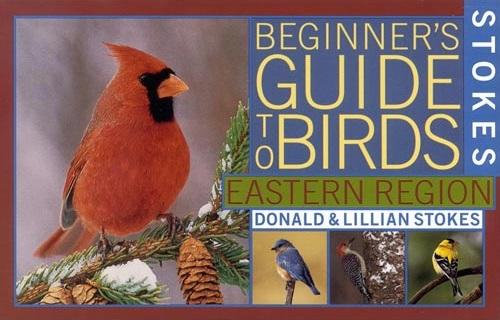Stokes Beginner's Guide