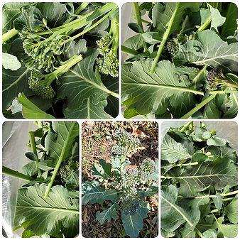 #Broccoli 🤪 Broccoli leaves are soo goo
