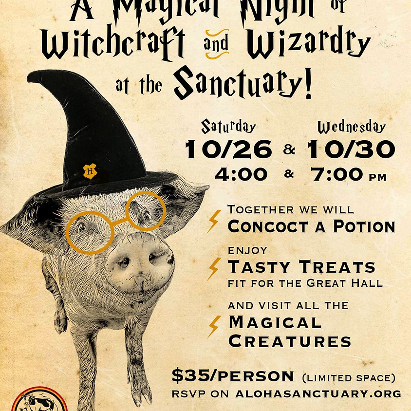 A Magical Night at the Sanctuary