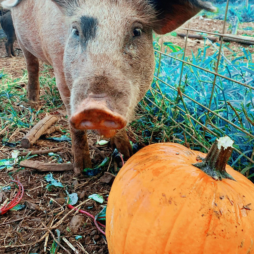 Spook-tacular Night at the Sanctuary: 2:30pm-3:30pm