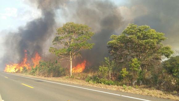 Queimadas ameaçam o fornecimento de energia elétrica em algumas regiões do Maranhão