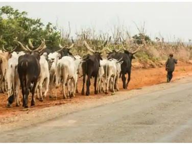 Nigeria: Eight Southern States Set to Enact Anti-Open Grazing Law