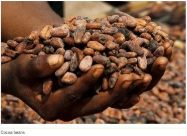 'Ghana risks losing spot as world 2nd largest cocoa producer' - Cocoa Farmers Union