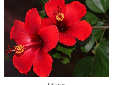 Nigeria exports 1, 983 containers of hibiscus to Mexico