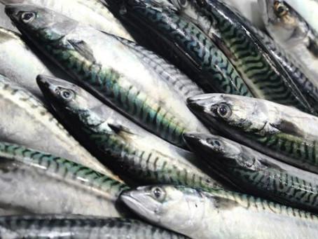 Nigeria Has 2,5 Million Metric Tonnes of Fish Deficit - Minister