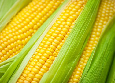 US sells record amount of corn to China as tensions rise