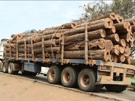 Where There is a Will There is a Way - 66 Containers of Stolen Illegal Timber Return to Mozambique
