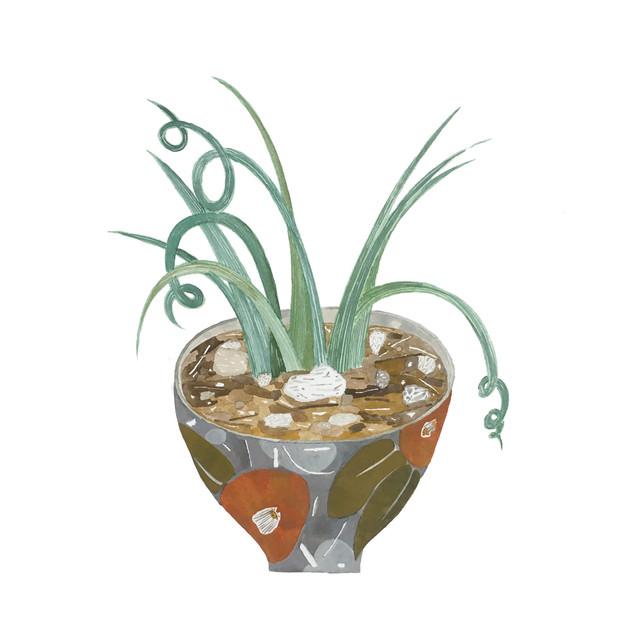 お椀に植物