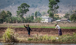 Lac Inle - Labour