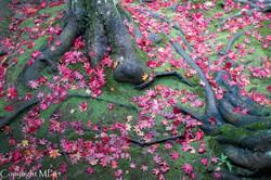 Des racines et des feuilles