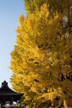 L'arbre aux 40 écus