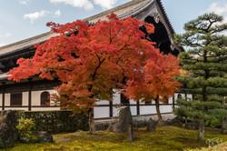Kyoto-Jardin Tofuku-ji