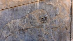 Persépolis5