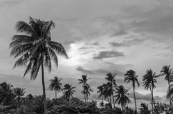 Île de Negros15