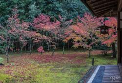 Kyoto-Jardin Koto-in