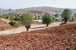Pindaya - Ocre