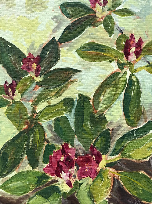 Rhododendron by Amy Kustra
