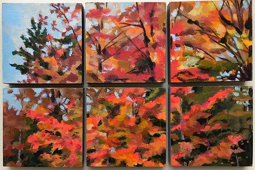 Neighboring Maple by Sandi Lemmerman
