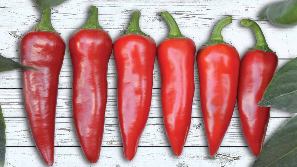 Pepper- Flaming Flare