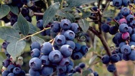 Blueberry- Combo