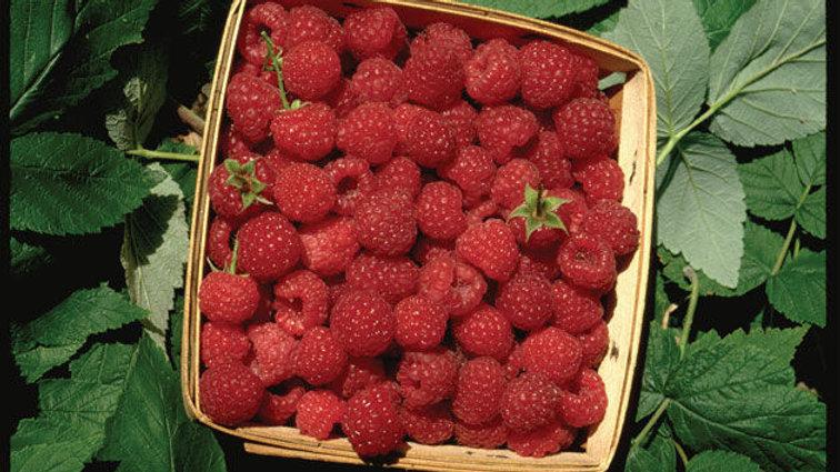 Raspberry- Boyne