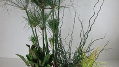 """Aquakidney Deluxe 20"""" -Cyperus"""