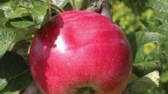 Apple-Red Sparkle