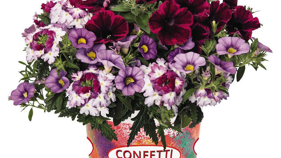 Combo - Confetti Garden Shocking Storm
